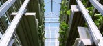 Vertical farming in Singapore