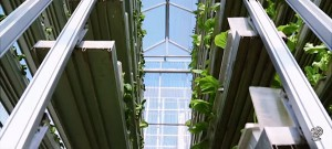 Vertical farms in Singapore