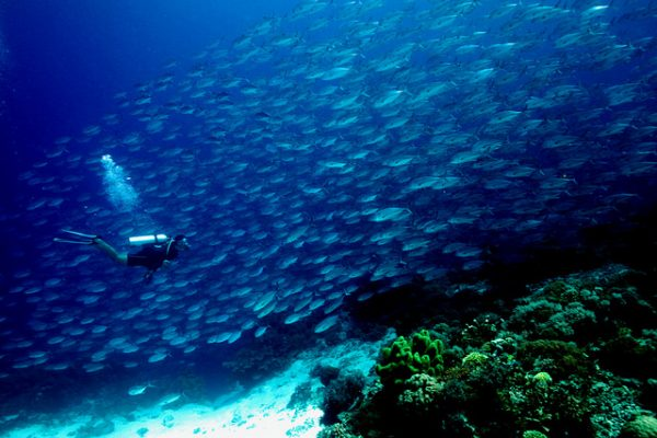 Tubbataha Reefs Natural Park, Philippines