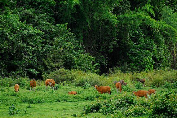 Thungyai-Huai Kha Khaeng Wildlife Sanctuaries, Thailand