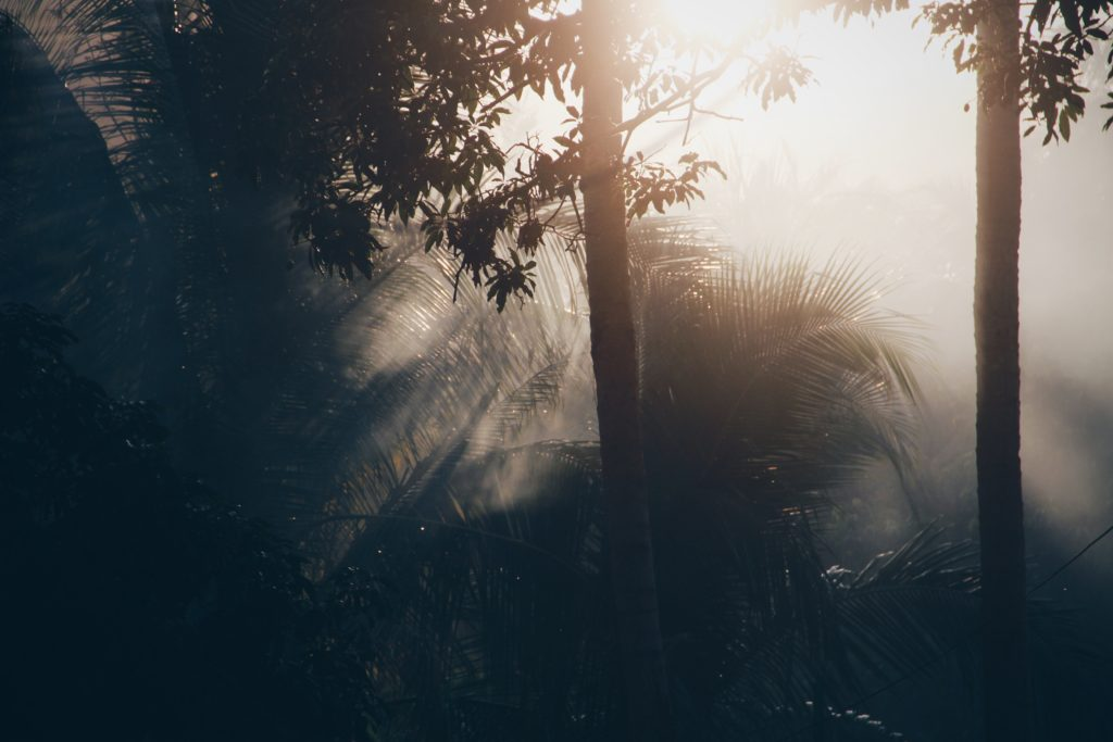 misty jungle