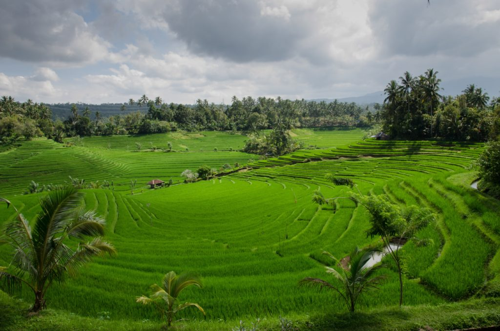 panorama of rice terraces